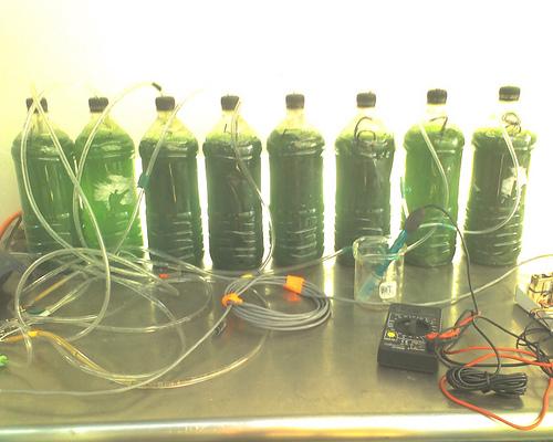 Выращивание хлореллы в домашних условиях в банке